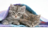 Sleepy Kittens...