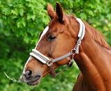 Horses-2776624 1920