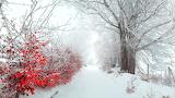 ^ Beautiful Winter Snowscape