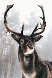 WM Buck 1
