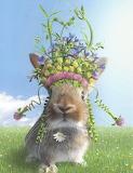 "Spring Bun ""Chiara Castellini"""