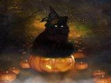 10_halloween-black-cat