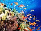 #St. Croix US Virgin Islands