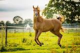 Horses - Bouncing Beauty