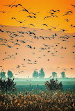 Flock of Birds Flying at Sunset