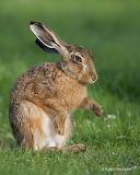 WM Hare 1