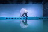 A polar bear in an aquarium exhibit at the Grandview mall in Gua