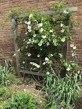 Herb garden trellis
