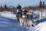 Winter Dogs Snow Trail Husky Run 559845 1280x853