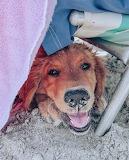 Dog beach trip