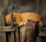 Comfortable anywhere