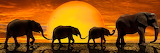 Background-fondo elefantes