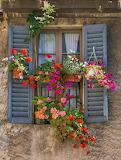 Window blue shutters hanging baskets