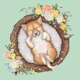 Baby Dingo by Elise Martinson