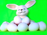 The-eggs-of-the-rabbit-