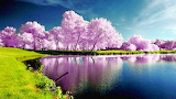 #Awesome Spring Scene
