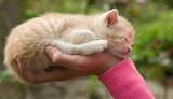 Handful of love