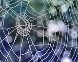 spiderweb_by_sherln