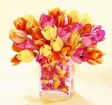 #Jellybean Tulips