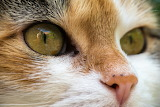 Beatiful cat