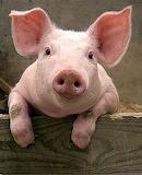 Pig%9