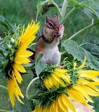 Fresh Sunflower Seeds...Yum!