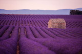 Purple-lavender-flowers-field-with-lonely-old-2YETUHA-1-scaled