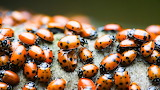 Animals bugs
