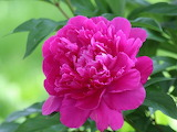 ☺♥ Pink beauty...