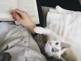 Cat-books-tattoo-animals