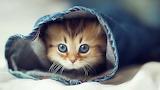 Kitten Hiding in Jean's Leg