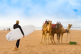 Tough to get a surfboard on a camel - and vice versa.