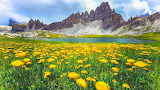 Alpes-dolomites-in-italy-spring-wild-flowers-green-grass-beautif