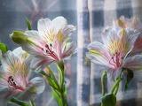 Flowers4 9-24-04