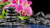 Orchids and River Rocks