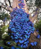 Papallona Monarca - Monarc Butterfly