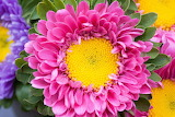 Beautiful pink flower yellow center