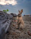 """Madamma tumblr natgeoyourshot """"Beach Bunny"""" """"David Leeming"""""""