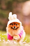 #I'm a Bunny Now!
