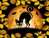 Halloween Scare Cat