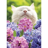 Kitty-smelling flowers