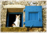 Cat with Blue Shutter