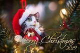 🎄Merry Christmas!!!