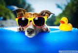 Cute-dog-wearing-big-glasses