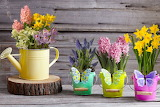 Spring flowers collection-wallpaper-1152x768