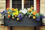 flowers-windows-boxes