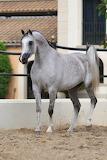Araibian Pale Horse