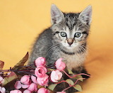Kitty & flowers