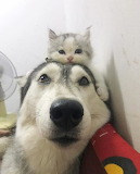 Dog with cat on head