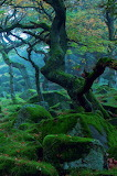 Padley Gorge, Derbyshire, England